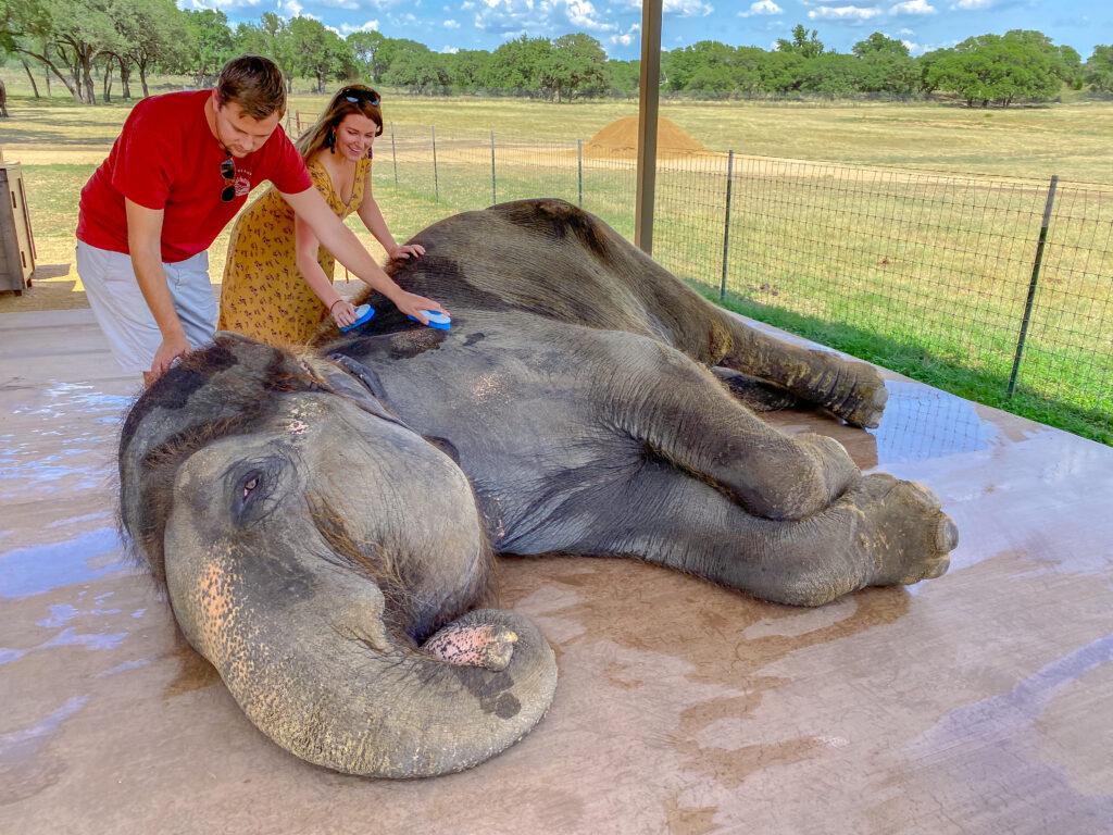 Elephant Sanctuary Texas-10
