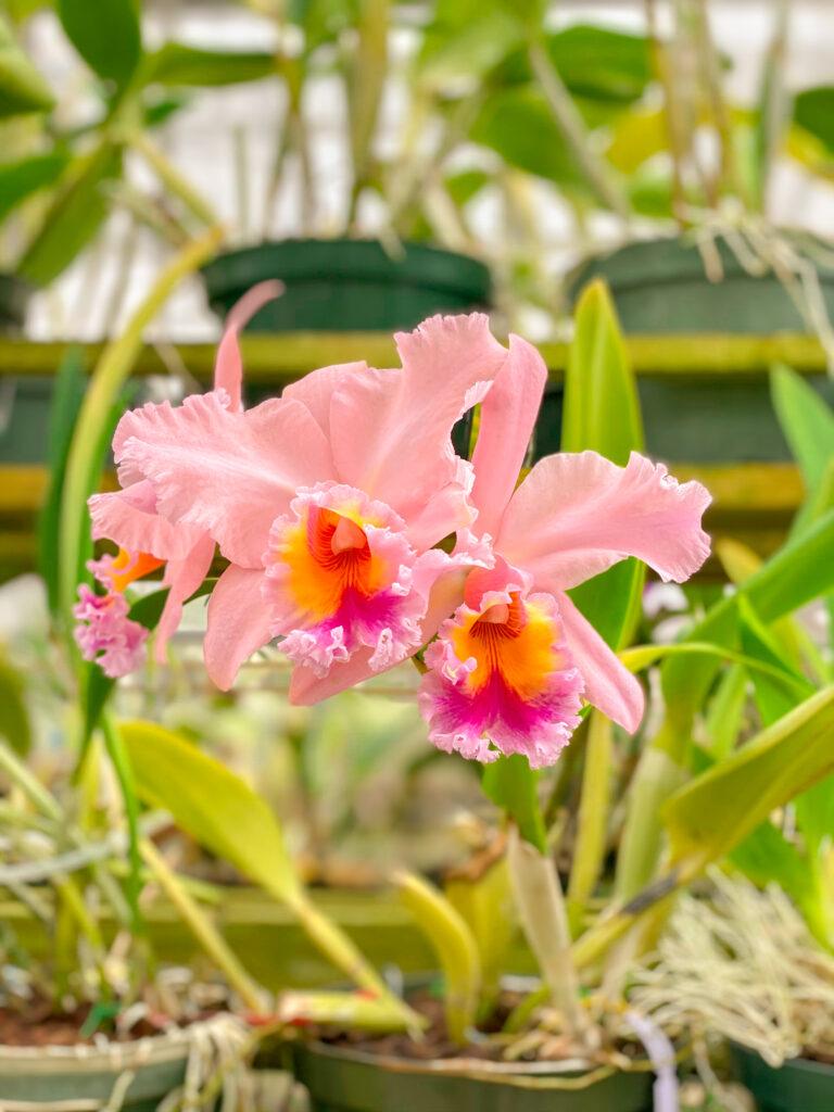 Corpus Christi Botanical Garden